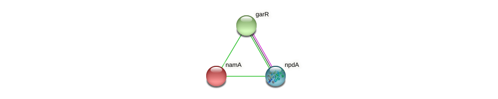 namA protein (Xanthomonas campestris campestris) - STRING interaction network