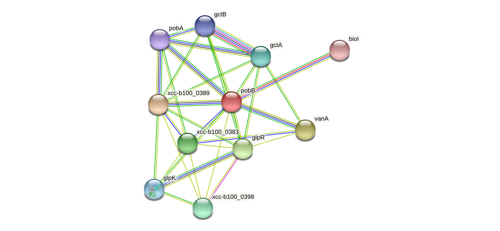 pobB protein (Xanthomonas campestris campestris) - STRING interaction network