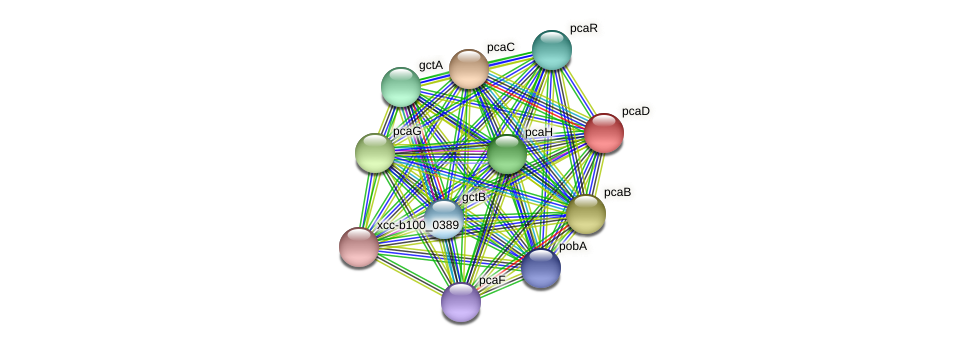 pcaD protein (Xanthomonas campestris campestris) - STRING interaction network