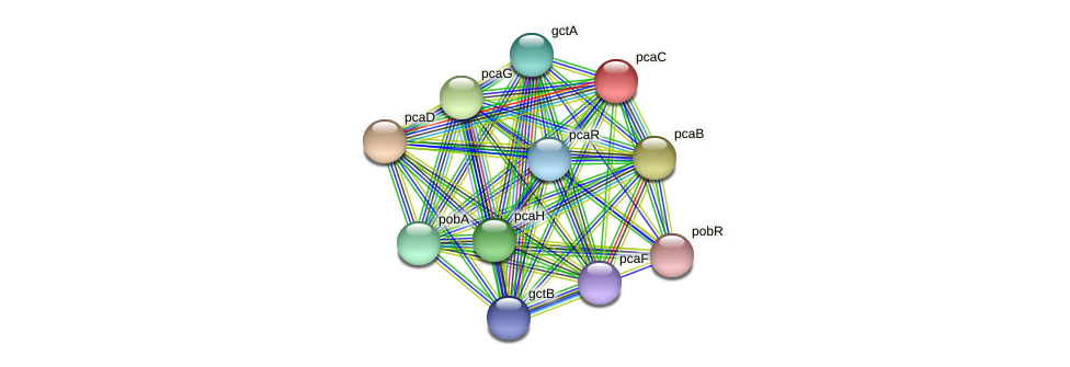 pcaC protein (Xanthomonas campestris campestris) - STRING interaction network