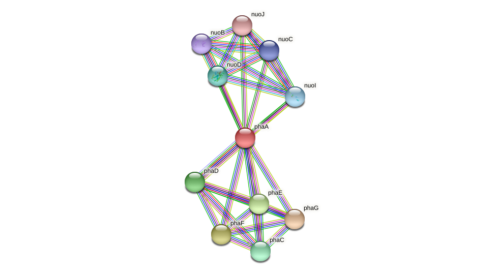 phaA protein (Xanthomonas campestris campestris) - STRING interaction network