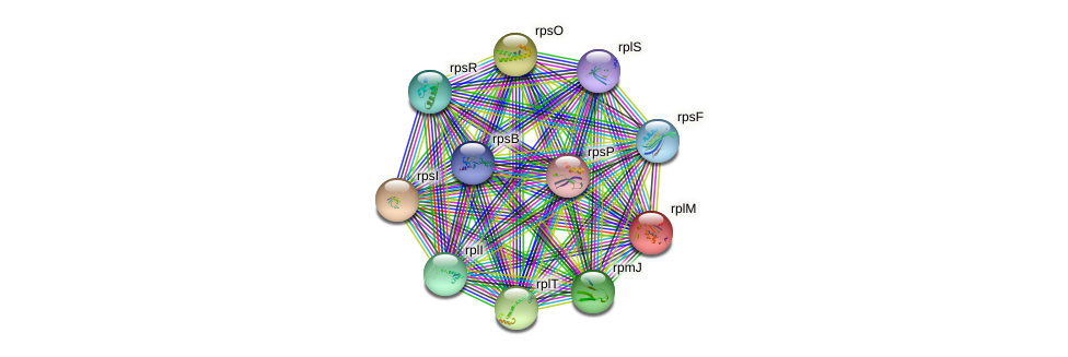 rplM protein (Xanthomonas campestris campestris) - STRING interaction network