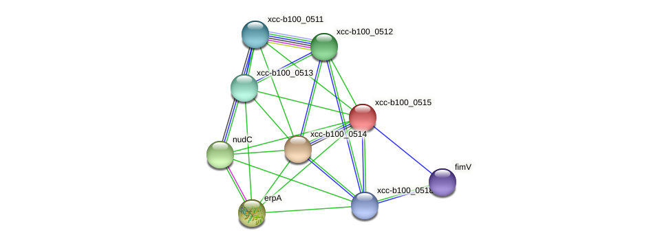 XCC0487 protein (Xanthomonas campestris campestris) - STRING interaction network
