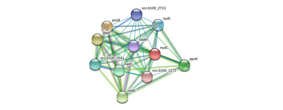 nudC protein (Xanthomonas campestris campestris) - STRING interaction network