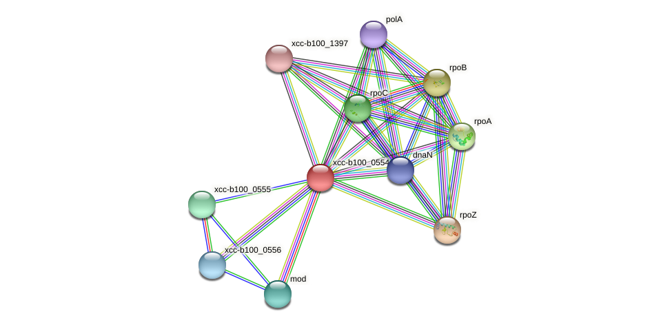 XCC0524 protein (Xanthomonas campestris campestris) - STRING interaction network