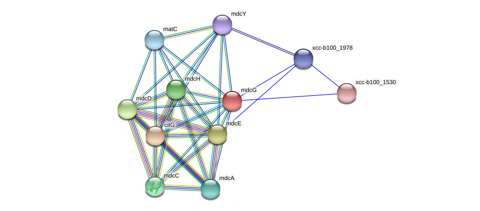 mdcG protein (Xanthomonas campestris campestris) - STRING interaction network