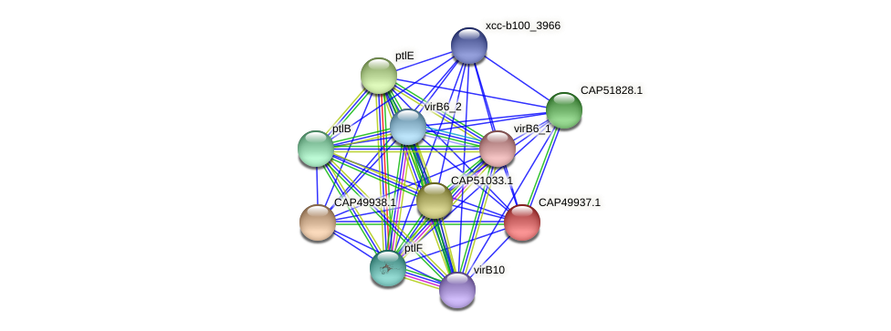 CAP49937.1 protein (Xanthomonas campestris campestris) - STRING interaction network