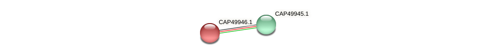 CAP49946.1 protein (Xanthomonas campestris campestris) - STRING interaction network