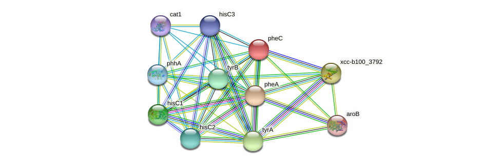 pheC protein (Xanthomonas campestris campestris) - STRING interaction network
