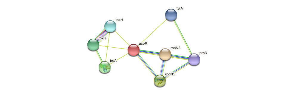 acoR protein (Xanthomonas campestris campestris) - STRING interaction network