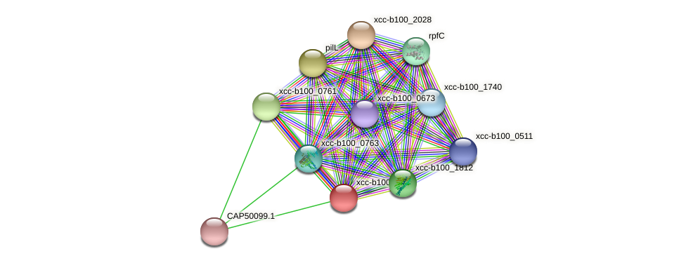 XCC3435 protein (Xanthomonas campestris campestris) - STRING interaction network