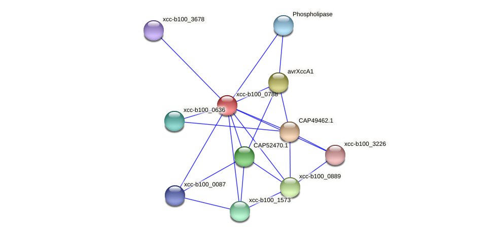XCC3409 protein (Xanthomonas campestris campestris) - STRING interaction network