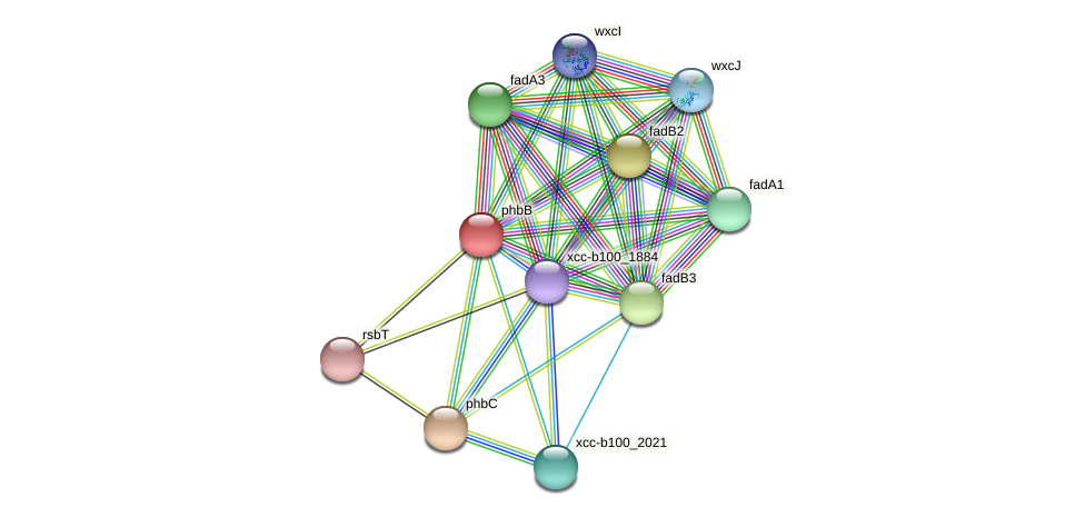 phbB protein (Xanthomonas campestris campestris) - STRING interaction network