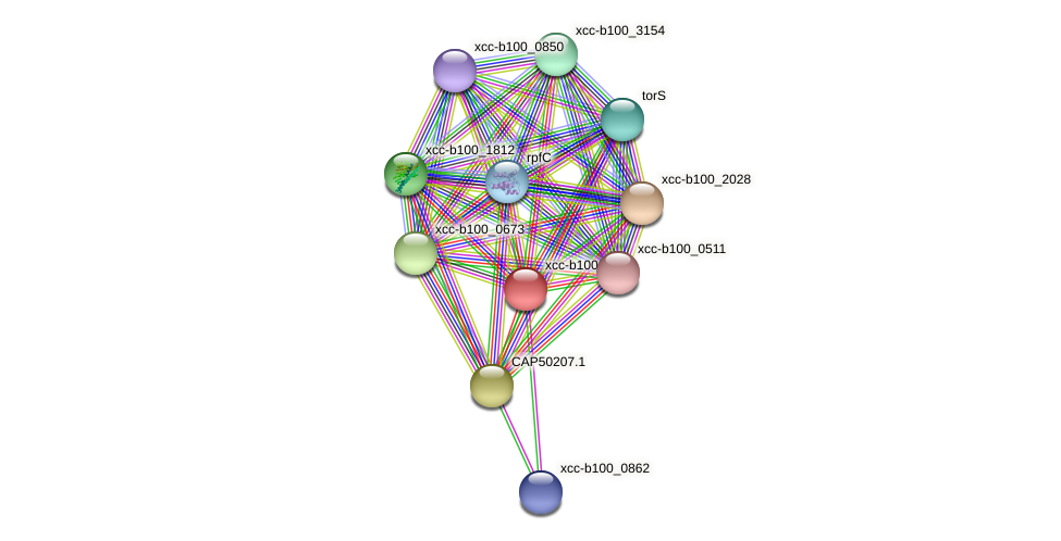 XCC3333 protein (Xanthomonas campestris campestris) - STRING interaction network
