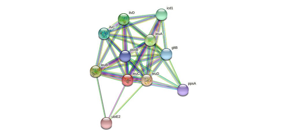 leuC protein (Xanthomonas campestris campestris) - STRING interaction network