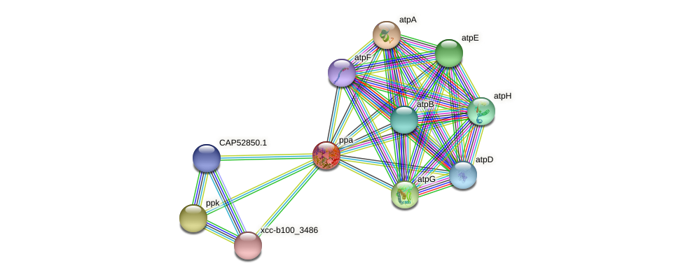 ppa protein (Xanthomonas campestris campestris) - STRING interaction network