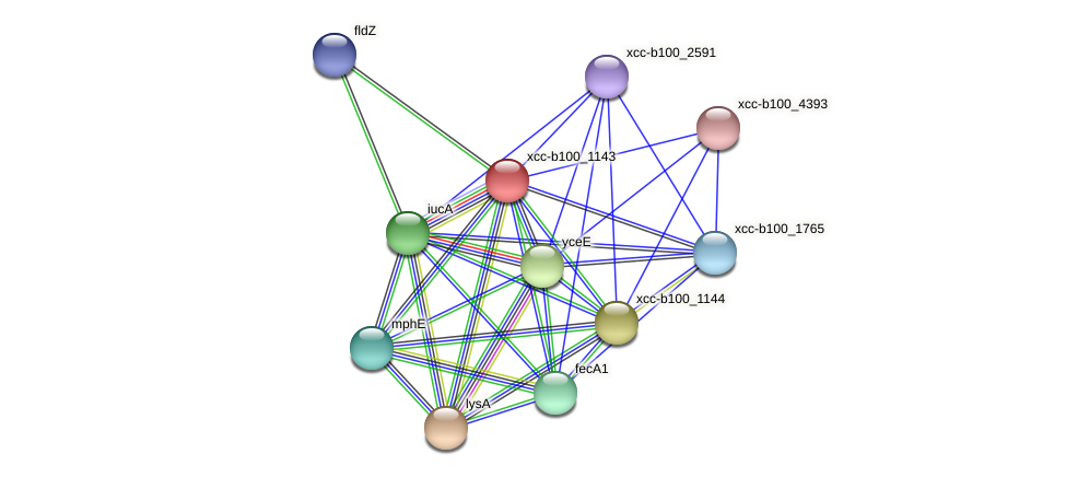 XCC3052 protein (Xanthomonas campestris campestris) - STRING interaction network