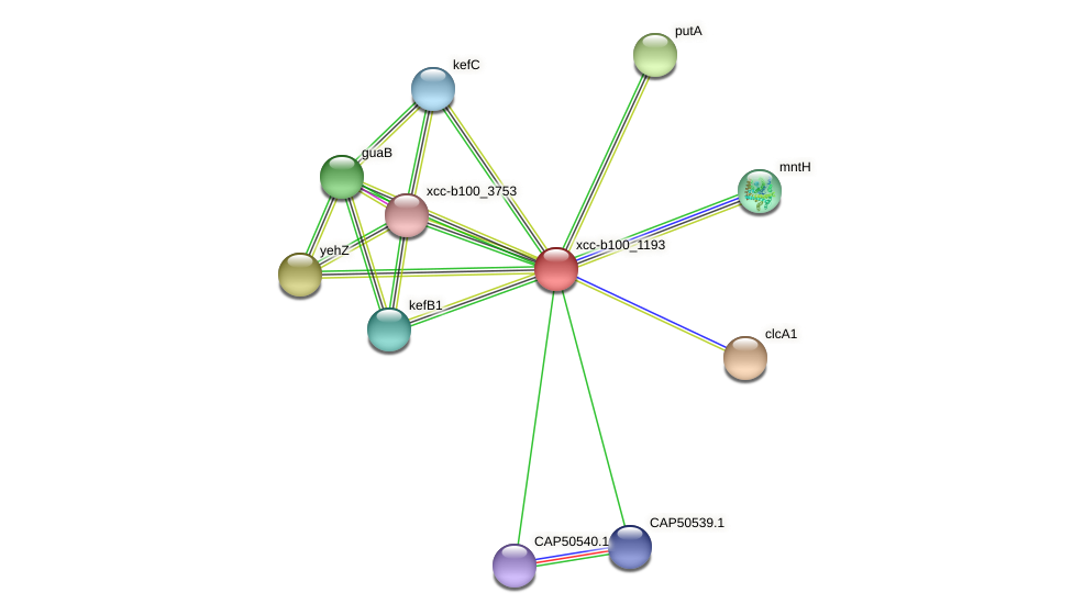XCC2956 protein (Xanthomonas campestris campestris) - STRING interaction network