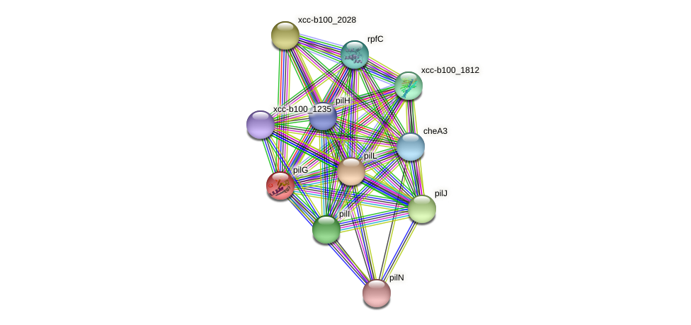 pilG protein (Xanthomonas campestris campestris) - STRING interaction network