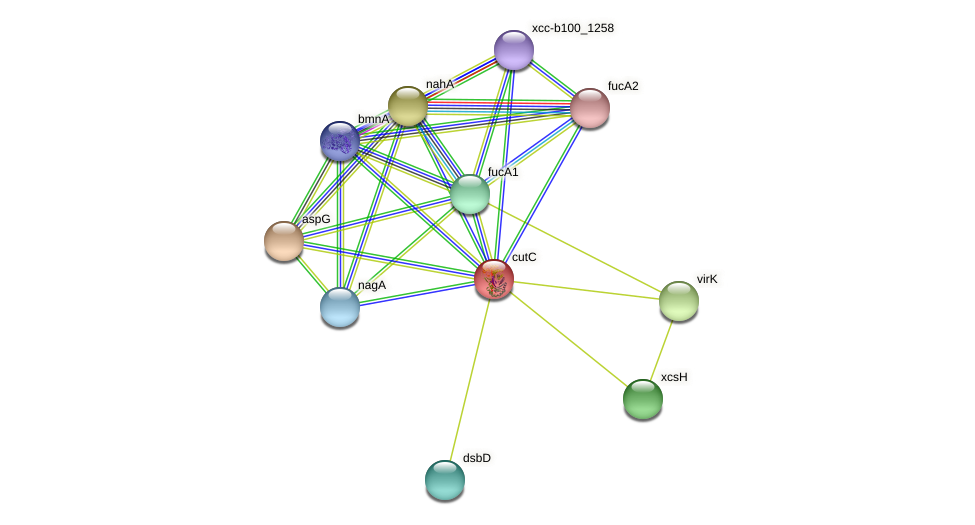 cutC protein (Xanthomonas campestris campestris) - STRING interaction network