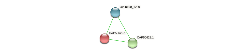 CAP50629.1 protein (Xanthomonas campestris campestris) - STRING interaction network