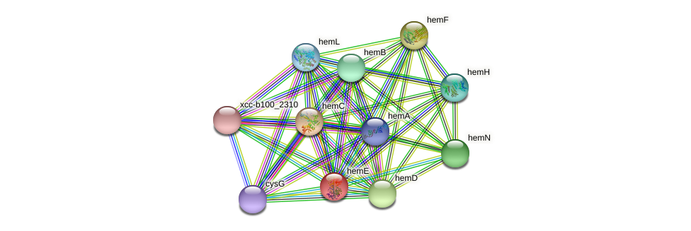hemE protein (Xanthomonas campestris campestris) - STRING interaction network