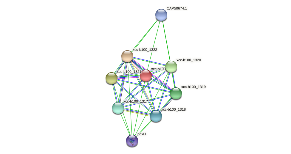 XCC2833 protein (Xanthomonas campestris campestris) - STRING interaction network