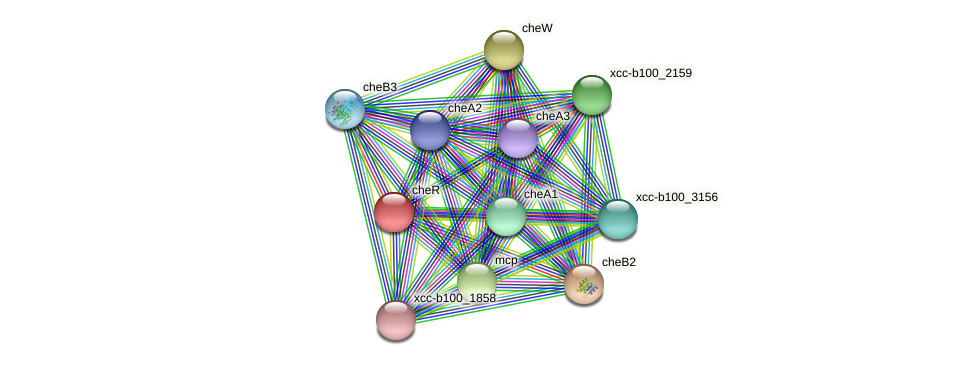 XCC2704 protein (Xanthomonas campestris campestris) - STRING interaction network