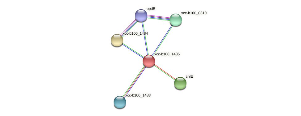 XCC2677 protein (Xanthomonas campestris campestris) - STRING interaction network