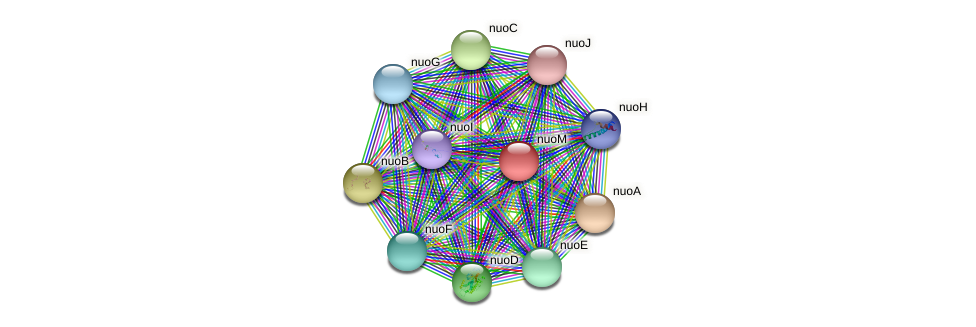 nuoM protein (Xanthomonas campestris campestris) - STRING interaction network