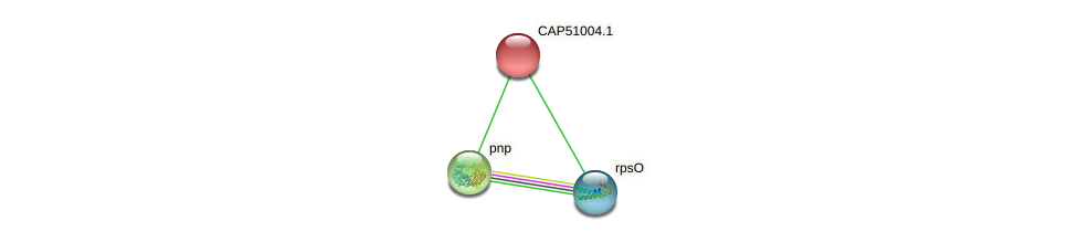 CAP51004.1 protein (Xanthomonas campestris campestris) - STRING interaction network