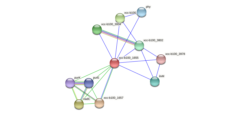 XCC2506 protein (Xanthomonas campestris campestris) - STRING interaction network