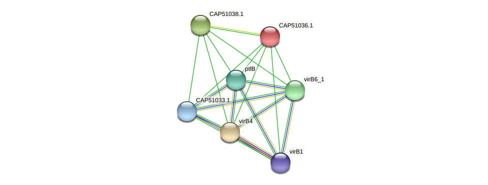 CAP51036.1 protein (Xanthomonas campestris campestris) - STRING interaction network