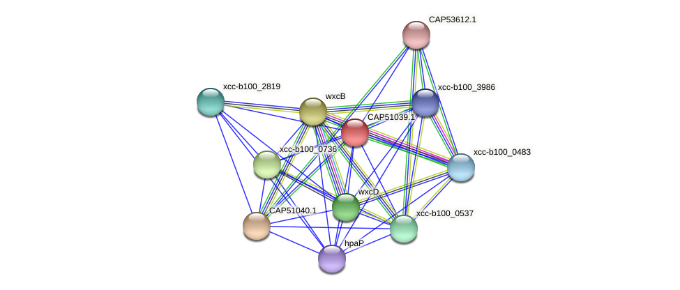 CAP51039.1 protein (Xanthomonas campestris campestris) - STRING interaction network
