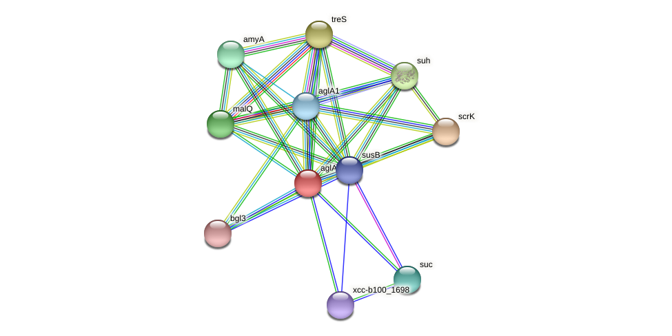 XCC2468 protein (Xanthomonas campestris campestris) - STRING interaction network