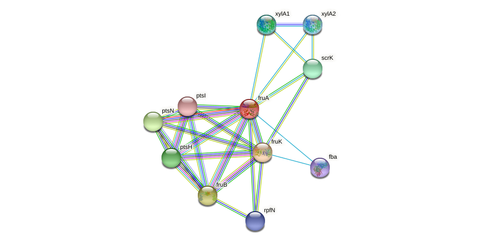 fruA protein (Xanthomonas campestris campestris) - STRING interaction network