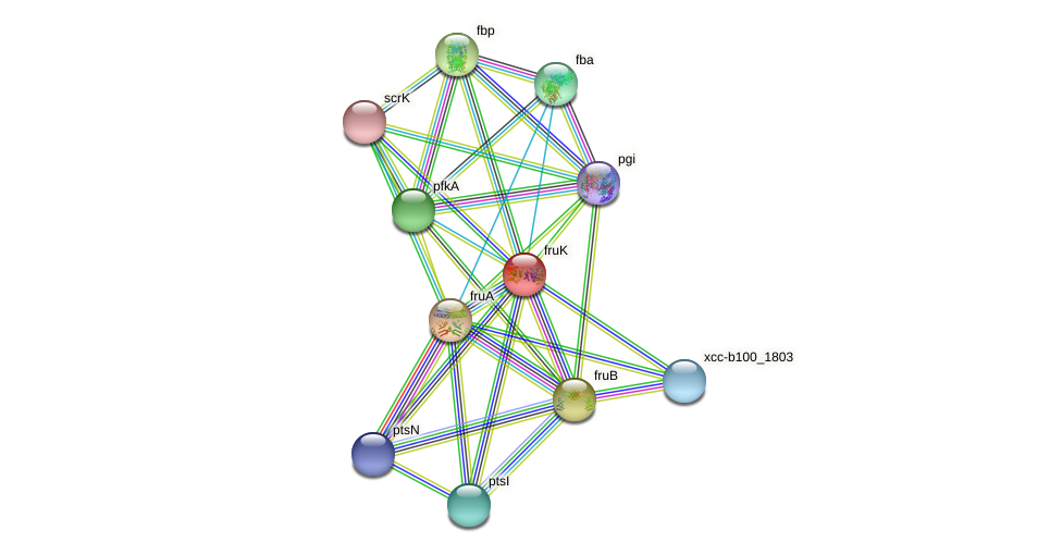 fruK protein (Xanthomonas campestris campestris) - STRING interaction network