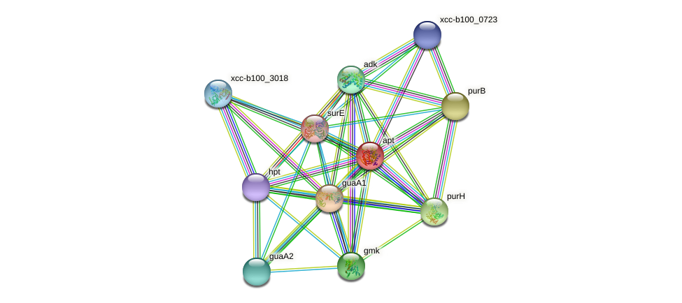apt protein (Xanthomonas campestris campestris) - STRING interaction network