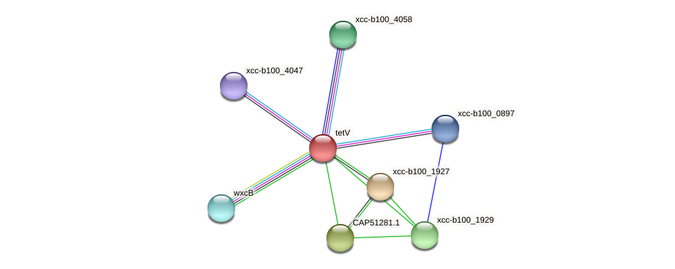 XCC2253 protein (Xanthomonas campestris campestris) - STRING interaction network