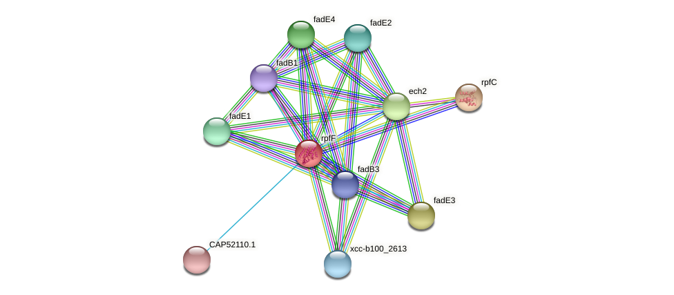 rpfF protein (Xanthomonas campestris campestris) - STRING interaction network
