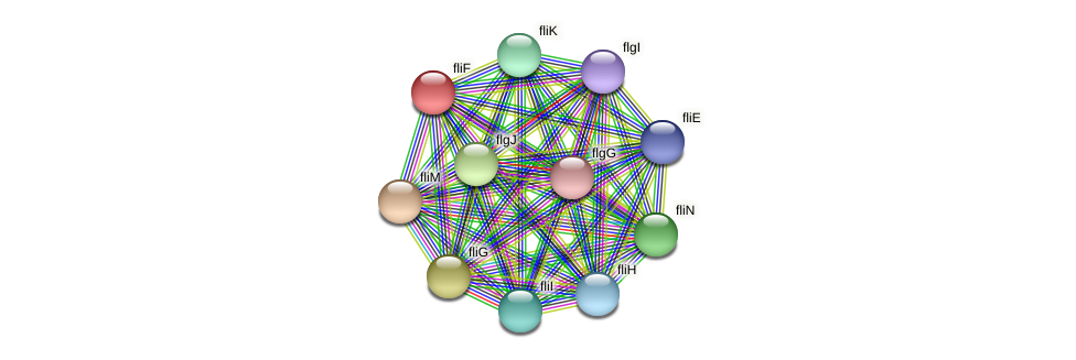 fliF protein (Xanthomonas campestris campestris) - STRING interaction network