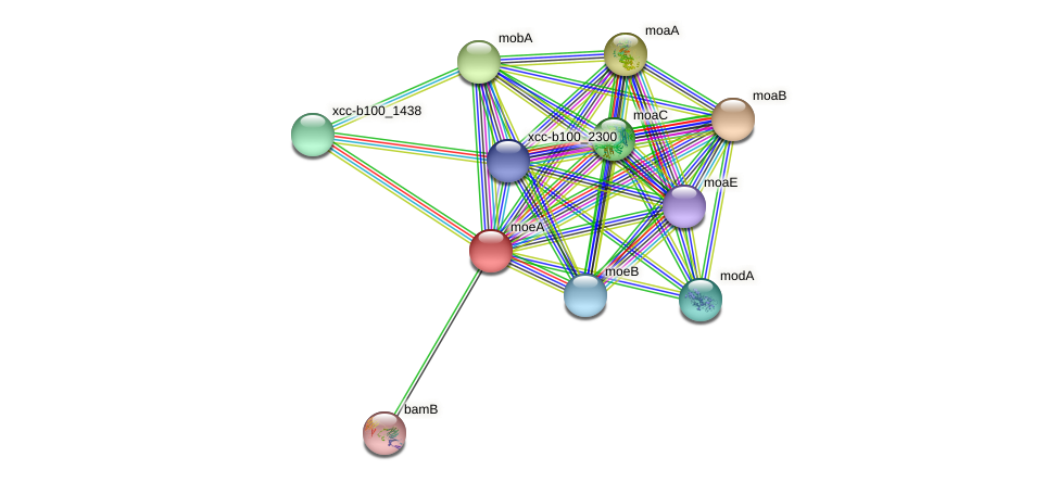 XCC1988 protein (Xanthomonas campestris campestris) - STRING interaction network