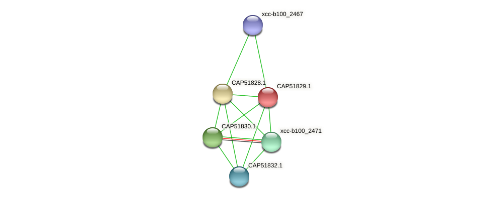 CAP51829.1 protein (Xanthomonas campestris campestris) - STRING interaction network