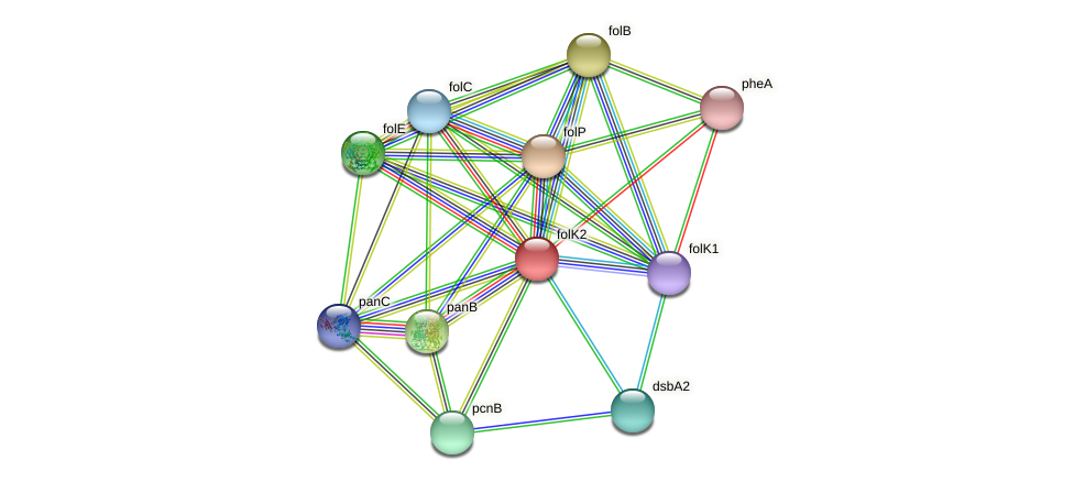folK2 protein (Xanthomonas campestris campestris) - STRING interaction network