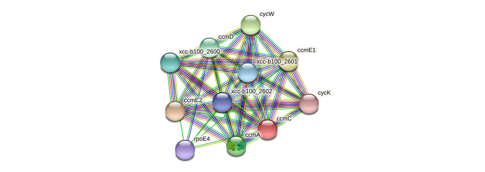 XCC1662 protein (Xanthomonas campestris campestris) - STRING interaction network