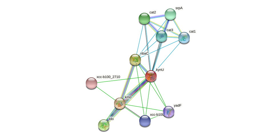 kynU protein (Xanthomonas campestris campestris) - STRING interaction network