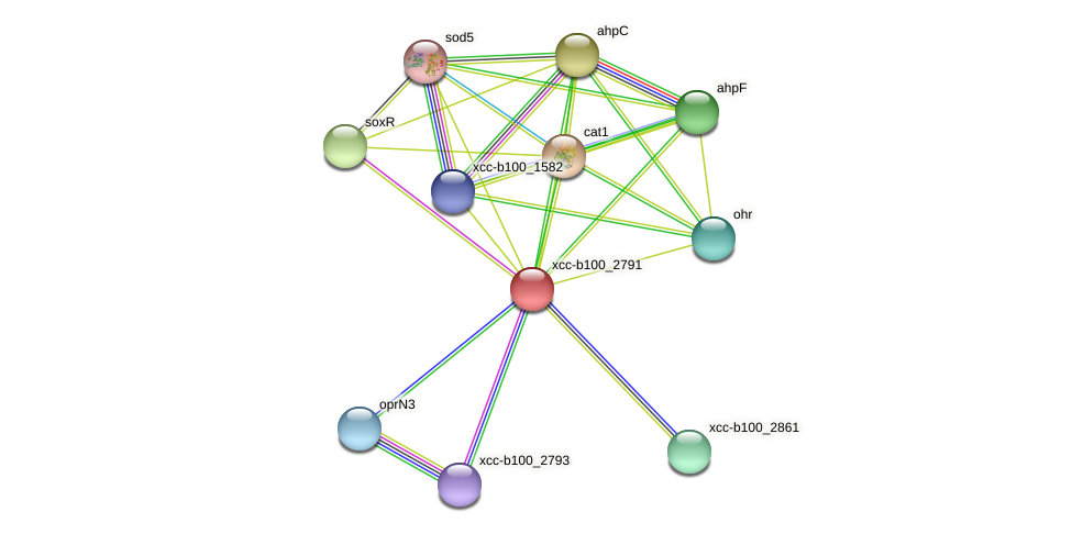 XCC1481 protein (Xanthomonas campestris campestris) - STRING interaction network