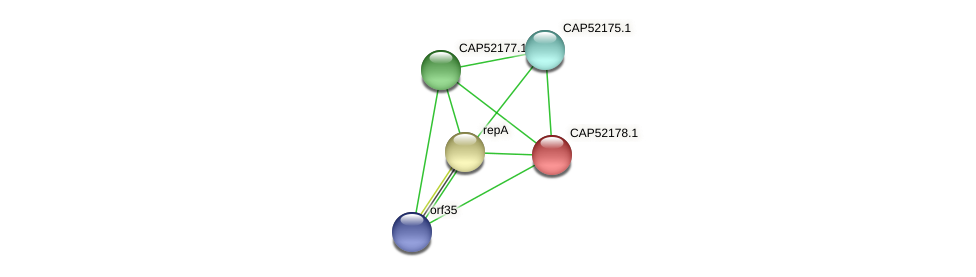 CAP52178.1 protein (Xanthomonas campestris campestris) - STRING interaction network
