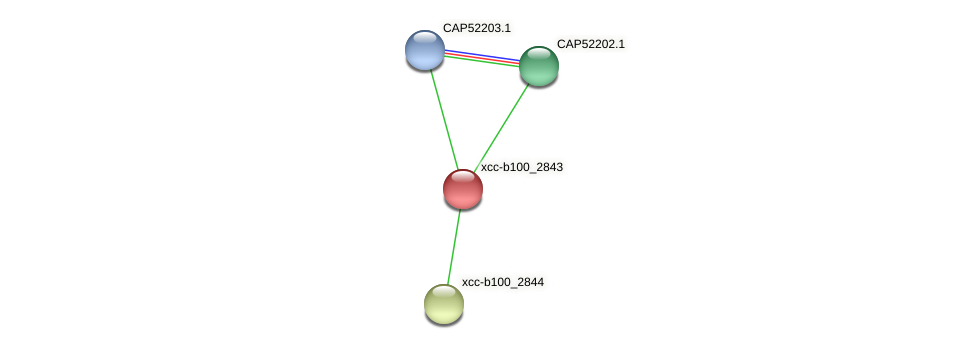 XCC1616 protein (Xanthomonas campestris campestris) - STRING interaction network