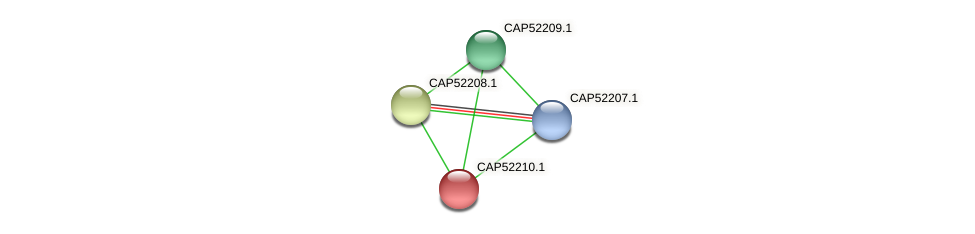 CAP52210.1 protein (Xanthomonas campestris campestris) - STRING interaction network